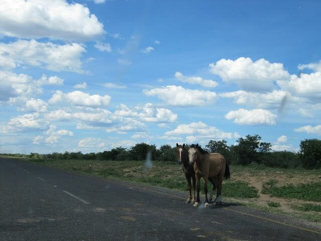 caballos en botswana