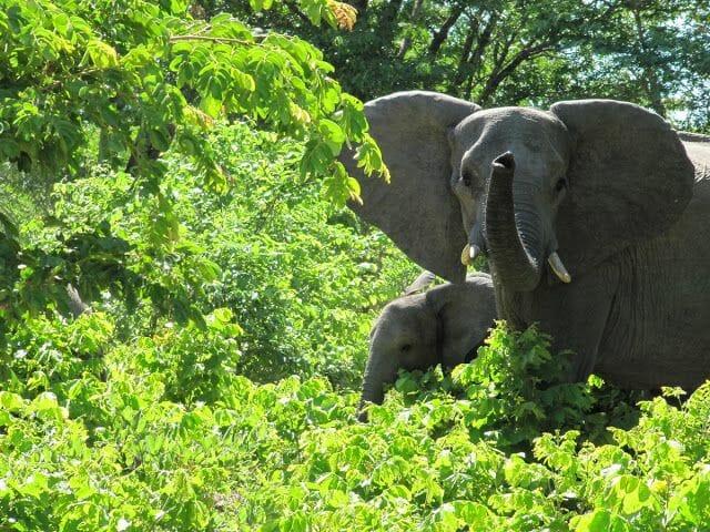 elefantes africa