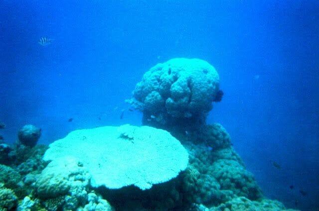barrera coral australia