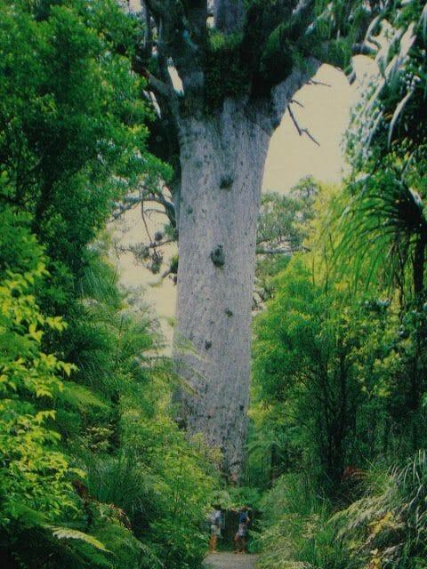 kairoua forest