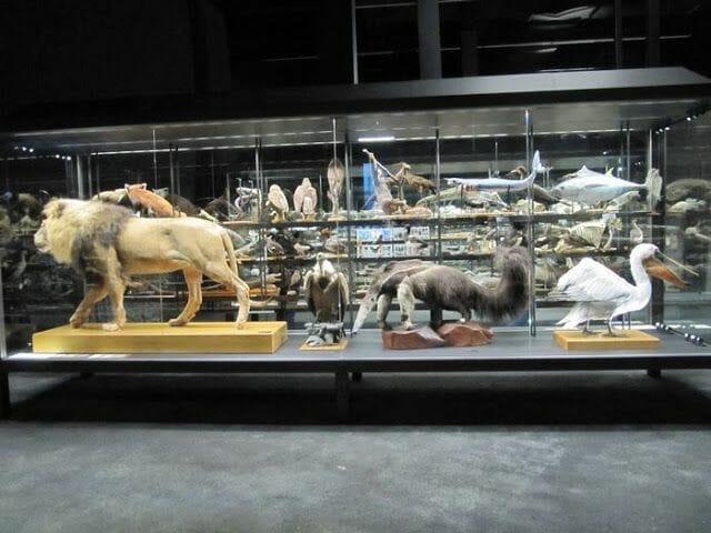 mamíferos disecados del museo de ciencias naturales de Barcelona