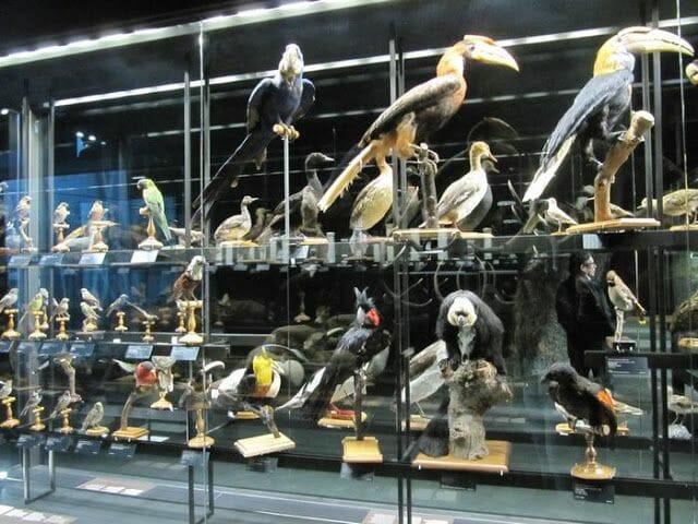aves disecadas, pajaros disecados en el museu blau