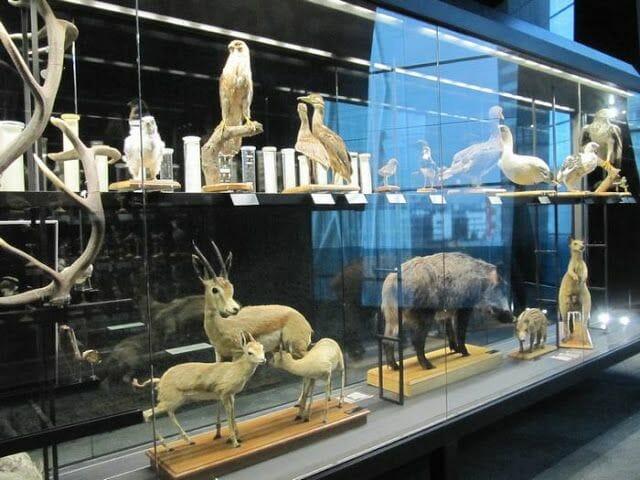 animales disecados del museo Blau de Barcelona