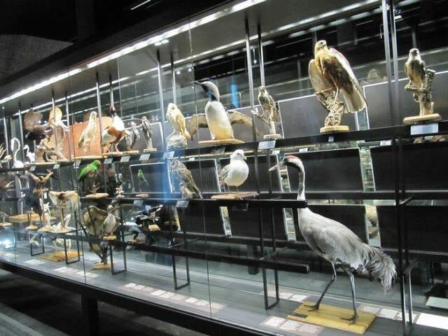 aves disecados del museo de ciencias naturales de Barcelona