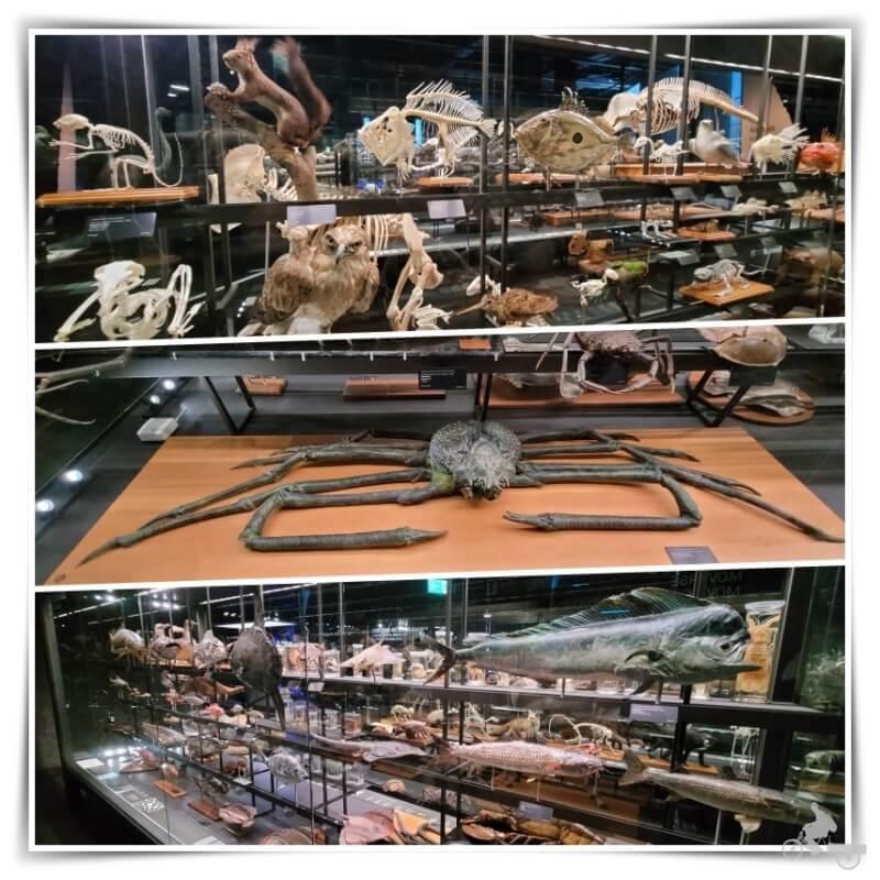 animales disecados del museu Blau