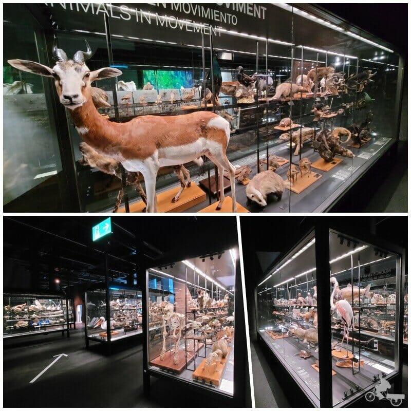 exposición animales disecados del museu Blau