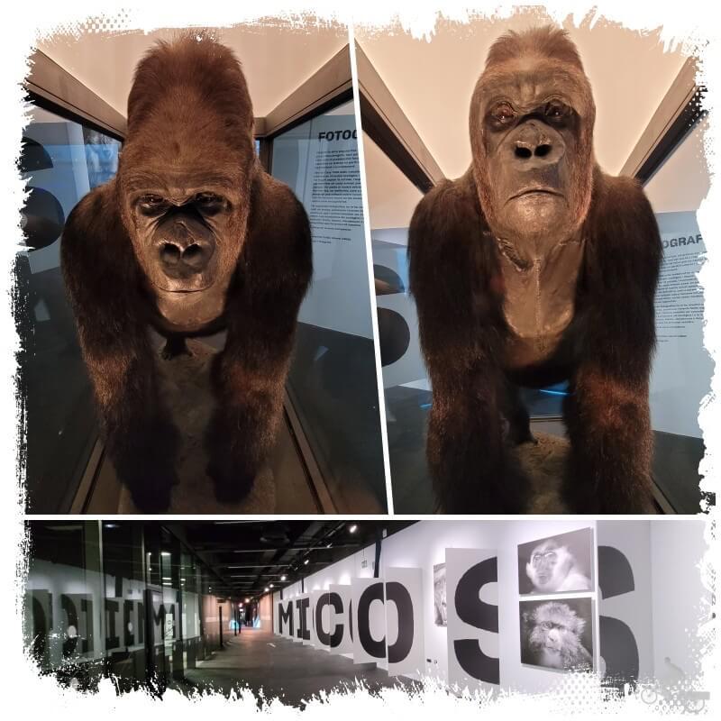exposición micos museu de ciències naturals de Barcelona
