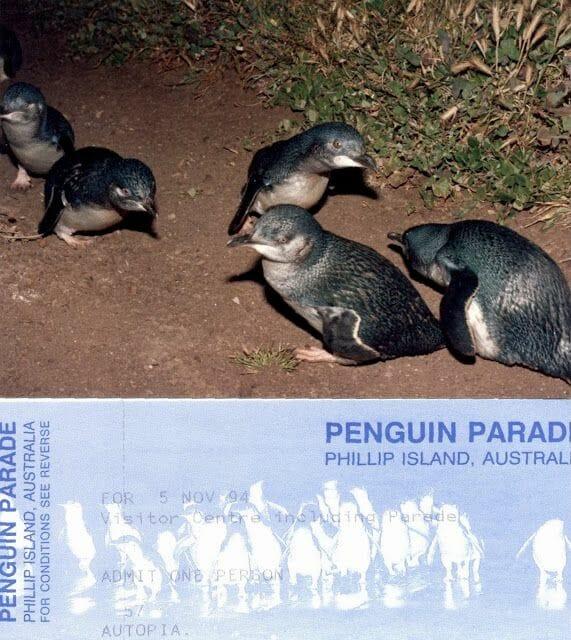 pingüinos de Philip Island