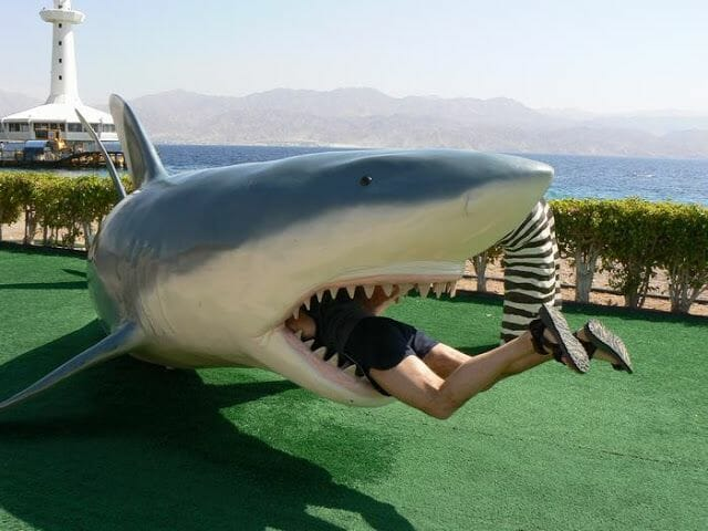 fotos haciendo el turista ataque tiburon