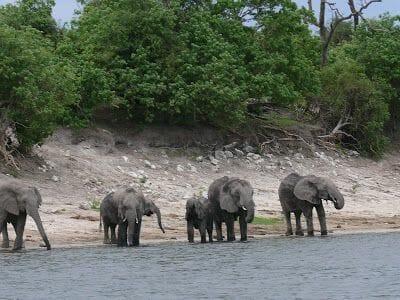 Sunset cruise, elefantes en el río Chobe