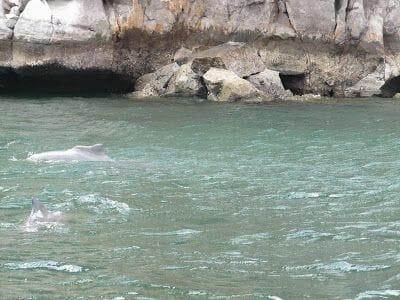 Península de Musandam delfines