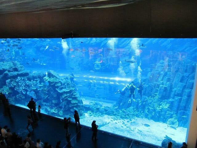 Dubai aquarium, Underwater zoo