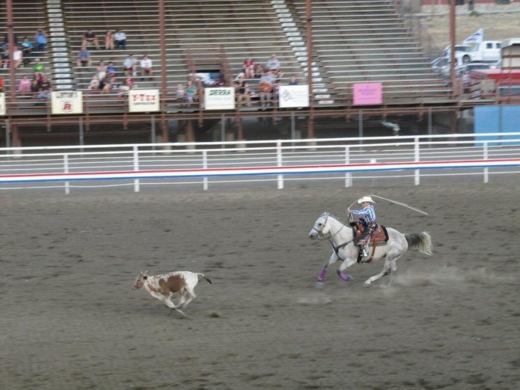 Stampede Rodeo Cody