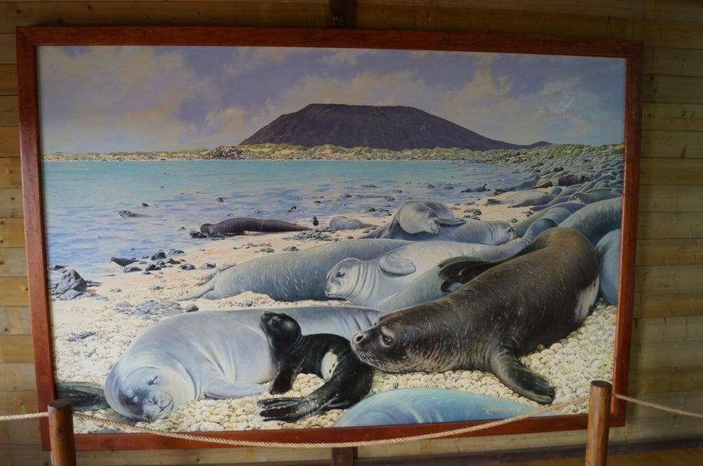dibujo isla de lobos marinos