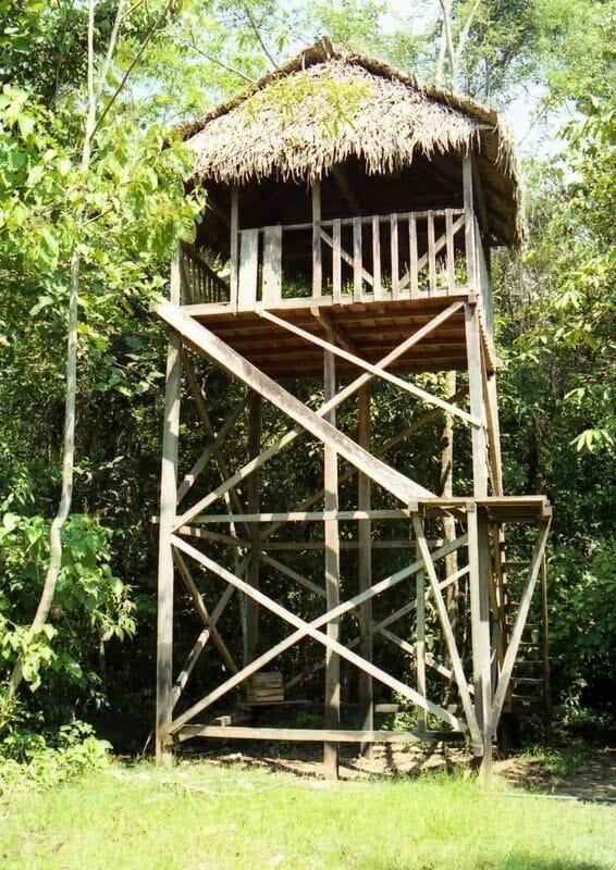 casa selva sudamericana