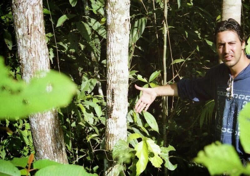 orugas en la selva