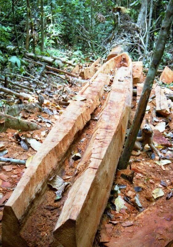 canoa selva en construccion