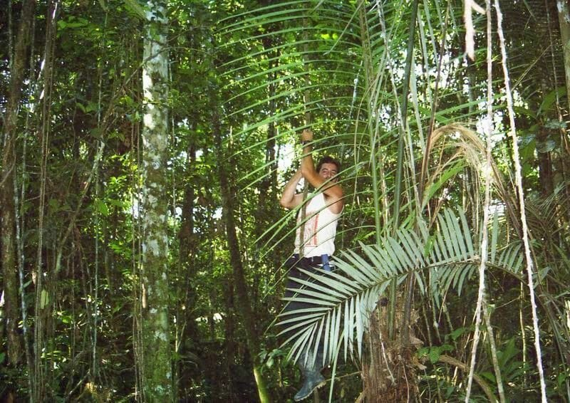 liana de la selva