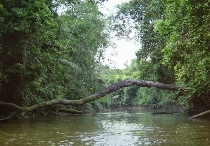 Río Parque Nacional de Cuyabeno