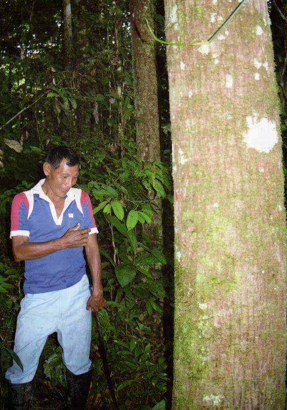 Parque Nacional de Cuyabeno
