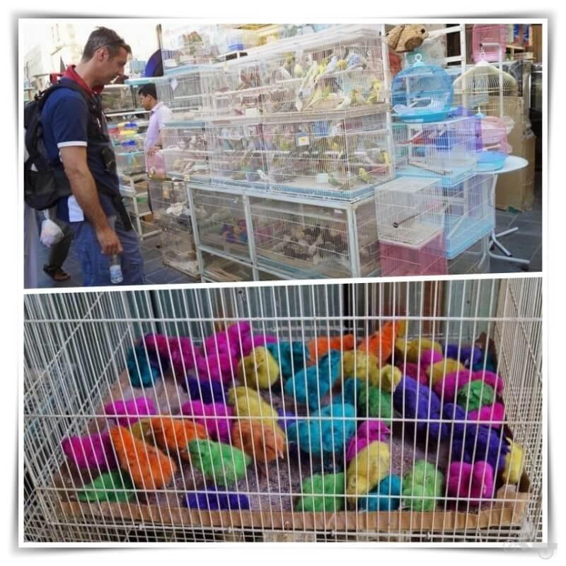 Zoco de los pájaros - qué ver en Doha en un día