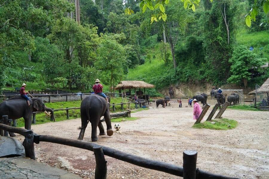 Partido de fútbol de elefantes Chiang Mai
