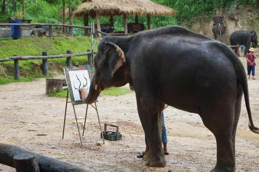 Elefantes pintores