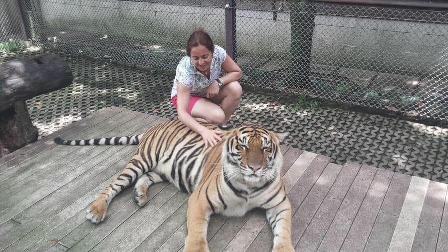 mujer con tigres Chiang Mai Tiger Kingdom