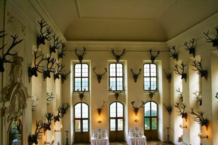 Castillo de Moritzburg cuernos ciervos sala