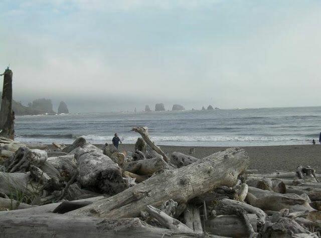 playa de la push troncos traidos por mareas