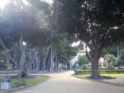ficus palermo, higueras de Palermo, piazza Marina, parque garibaldi