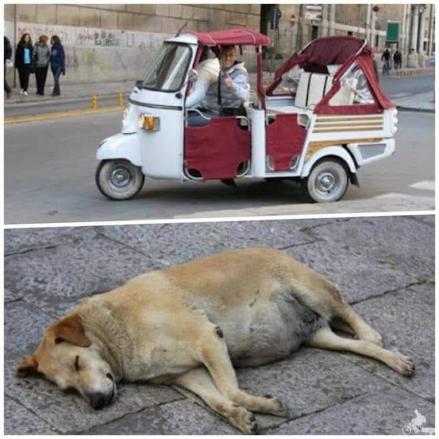 imagenes de Palermo