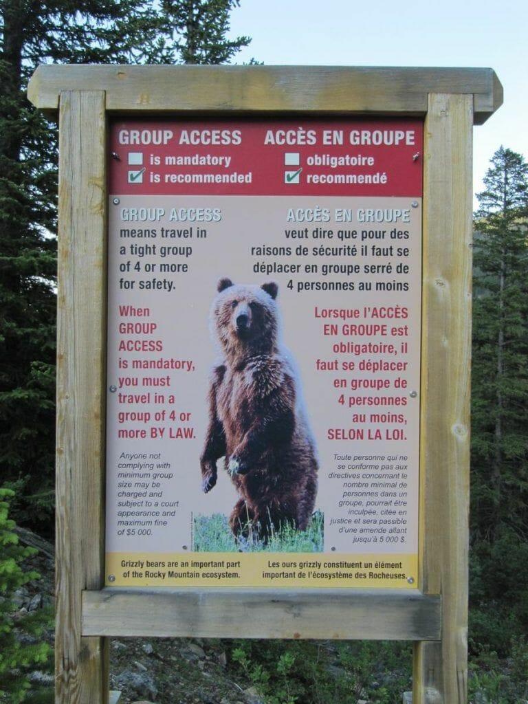 osos en el parque de Banff Canadá