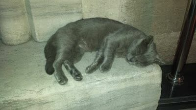 gato estambul
