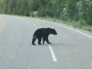 osos canadá