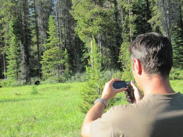 fotografiar osos negros del canadá