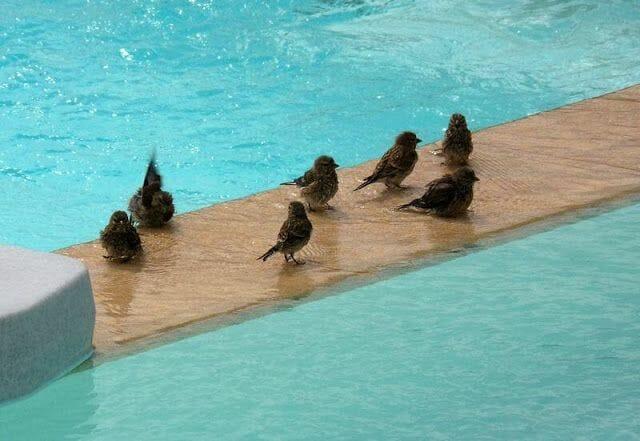 pájaros de Koufonisia