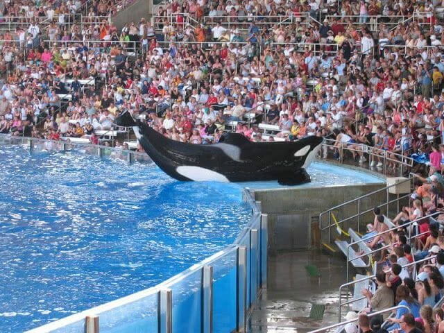 espectáculo de orcas en Sea World de Orlando