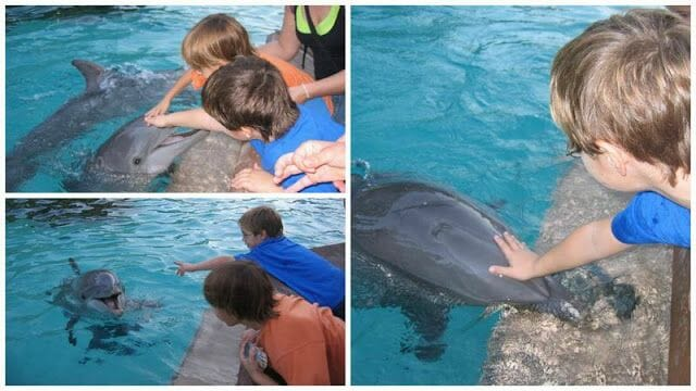 niños tocando delfines sea world orlando