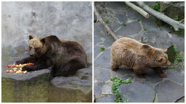osos que vigilan los fosos de Cesky krumlov