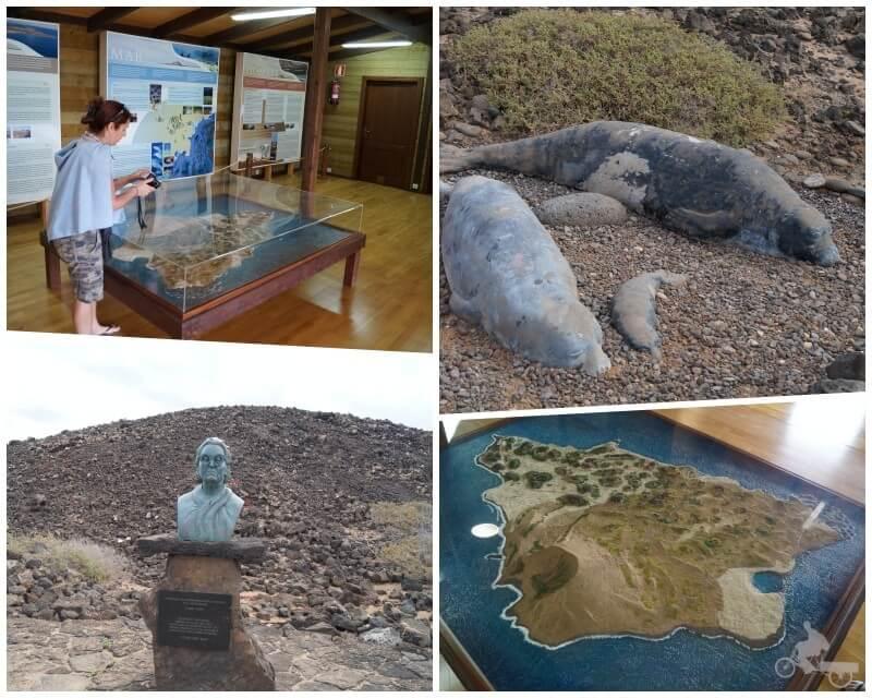 centro de visitantes isla lobos