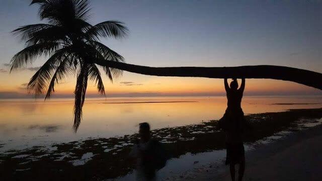 palmera isla de Nilandhoo Maldivas