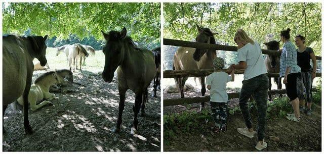 caballos parque nacional de Roztocze