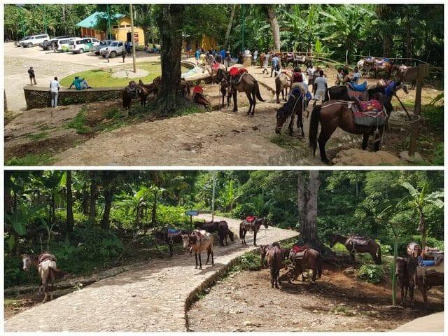 caballos de ascenso Citadelle laferrière de Haití