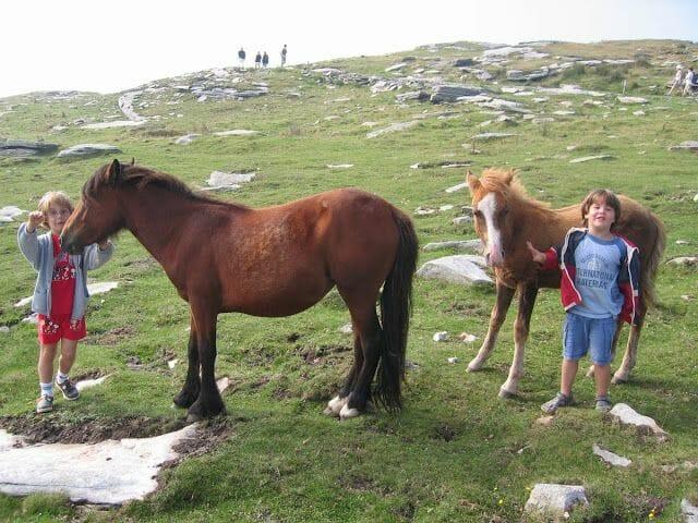 caballos cumbre larrun ponies