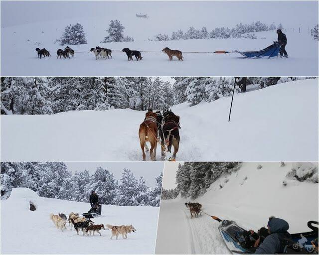 trineo perros pistas de esquí de Beille en el Ariège