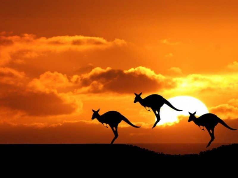 Atardecer australia con canguros