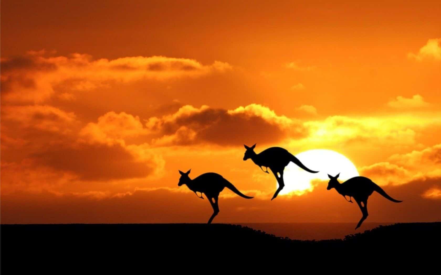 atardecer en australia con canguros