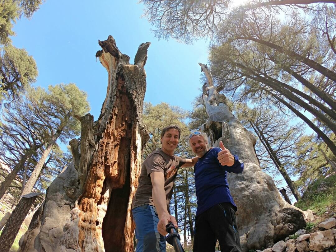 bosque de los cedros de dios del libano