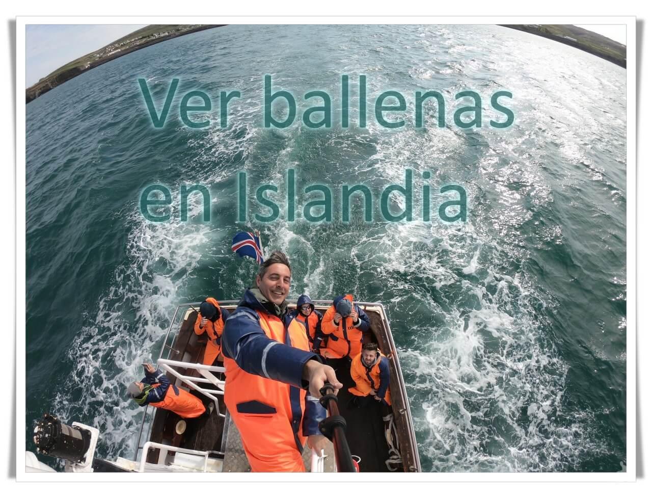 avistamiento de ballenas en husavik